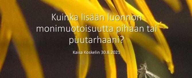 keltaisen kukan terälehdellä kärpänen