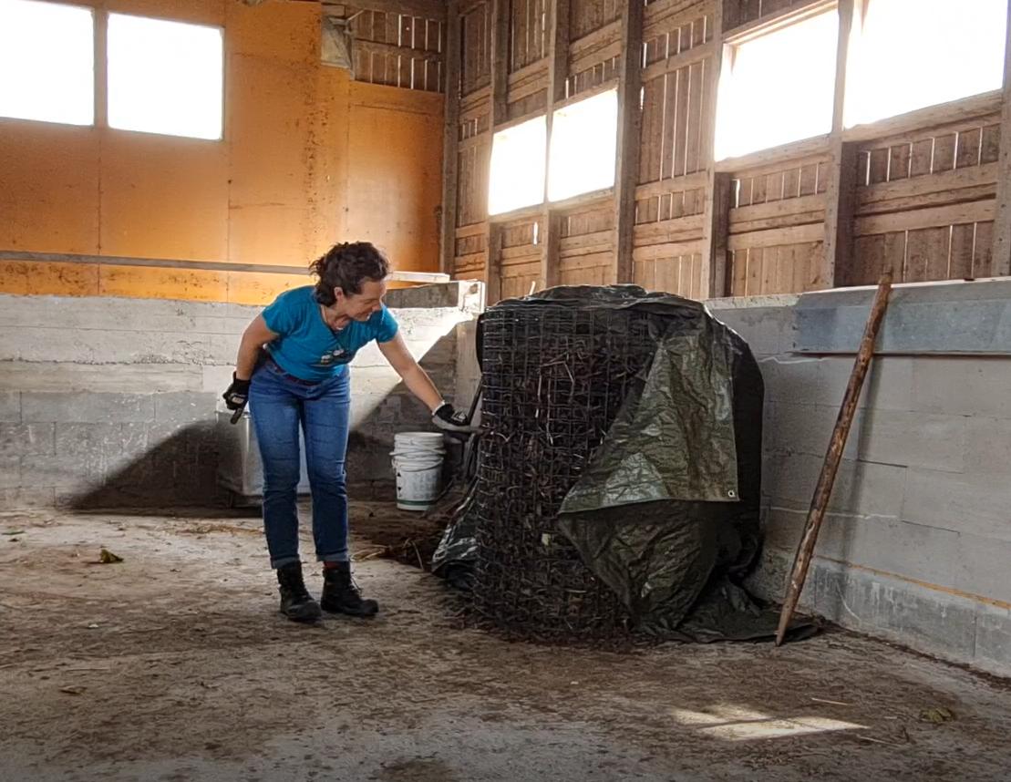 nainen katsoo kompostikehikkoa
