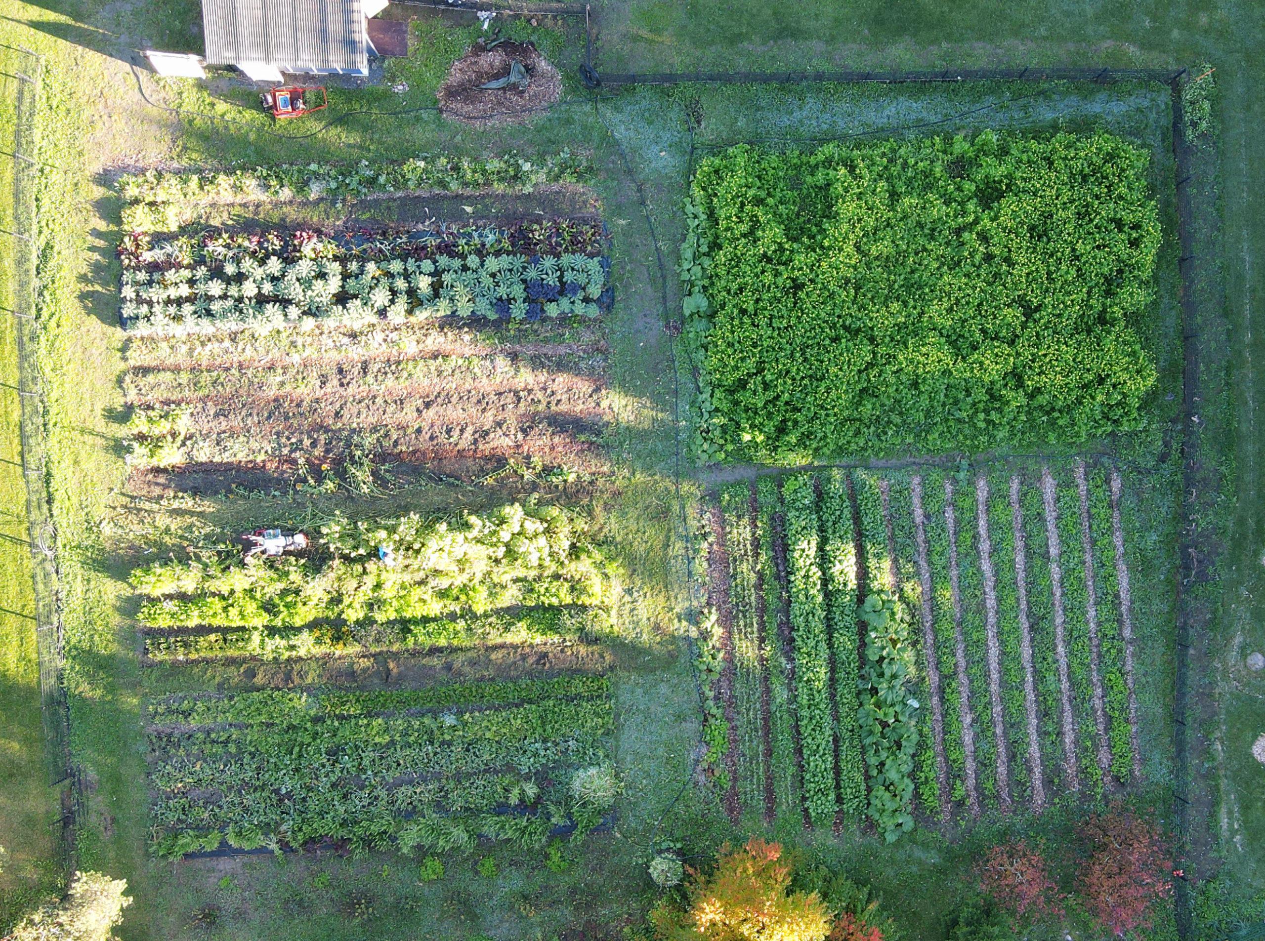 ilmakuva vehreästä puutarhasta, penkkiviljelmästä